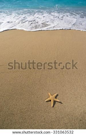 Starfish on the sandy beach  - stock photo