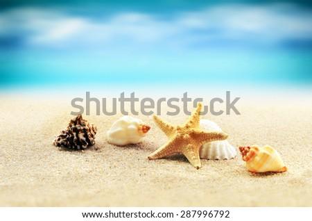 Starfish on the seashore and summer beach - stock photo