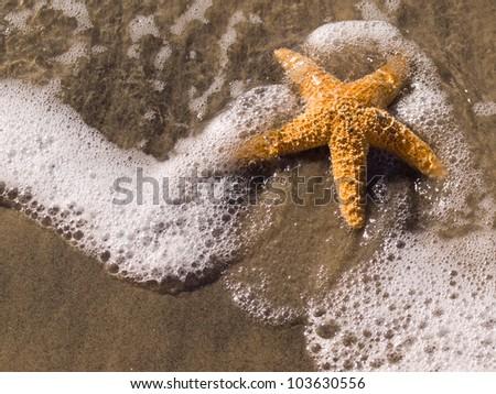 Starfish on the shore - stock photo