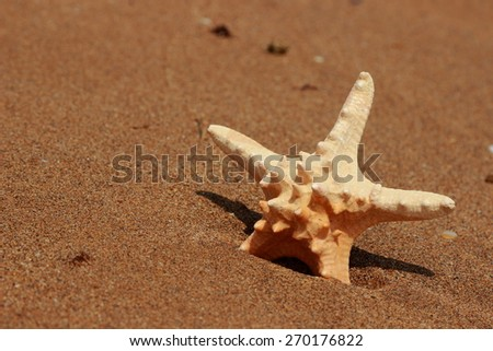 starfish on the shore of a sandy beach - stock photo
