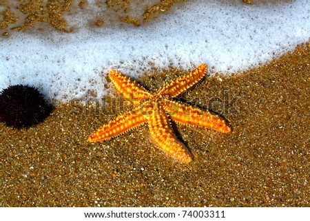 starfish on the shore of the Atlantic Ocean - stock photo