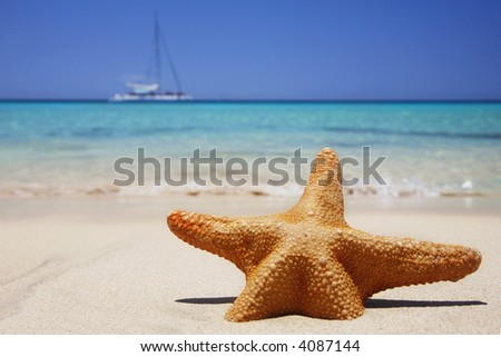 Starfish on tropical beach with yacht in the background