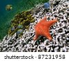 Starfish on white coral with yellow tube sponge and colorful tropical fish, Caribbean sea - stock photo