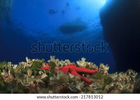 Starfish, reef and boat with scuba divers - stock photo
