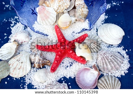 Starfish, sea slugs and sea shells