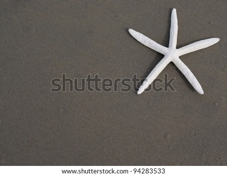 Starfish (seastar) on sand, Off center for copy space - stock photo