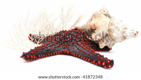 Starfish, shell and corals on white background - stock photo