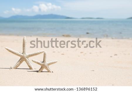 Starfish standing on the beach - stock photo