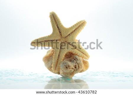 starfish, stone and water drops - stock photo