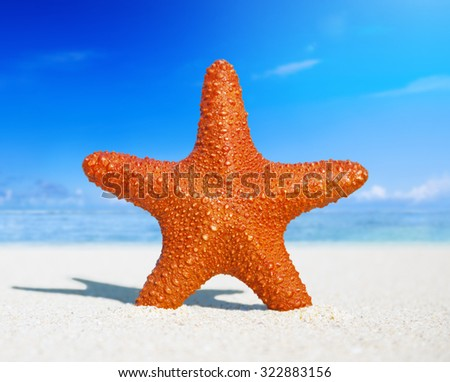 Starfish Tropical Beach Sand Summer Island Shell Concept - stock photo