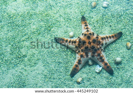Starfish underwater - stock photo