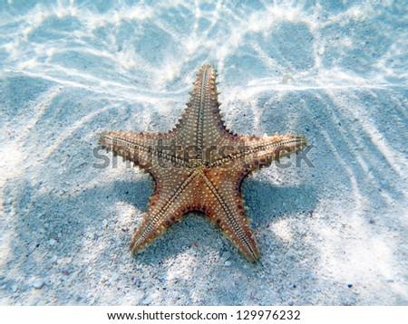 Starfish underwater in the Caribbean. - stock photo