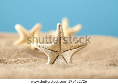 Starfishes in sand beach