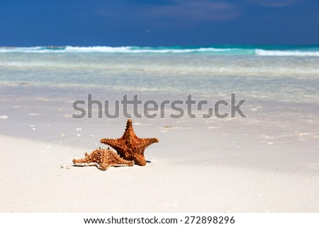 Starfishes on caribbean sandy beach, travel concept  - stock photo