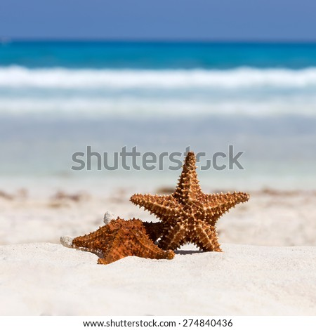 Starfishes on caribbean sandy beach, travel concept