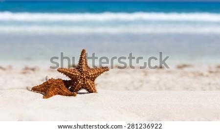 Starfishes on caribbean sandy beach, travel concept - stock photo