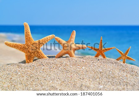 Starfishes on the beach against a blue sea - stock photo