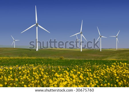 Stark White Electrical Power Generating Windmills, Turbines on Rolling Hills of Green Wheat and Yellow Wildflowers, Rio Vista, California