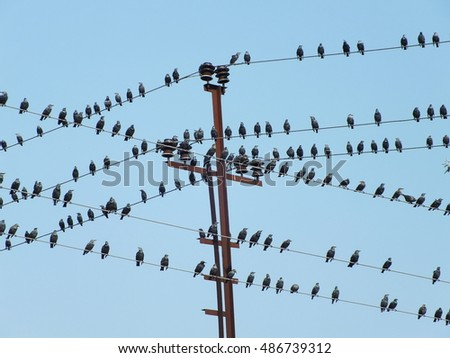 starlings on power line