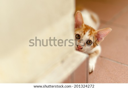 Starring little kitten  - stock photo