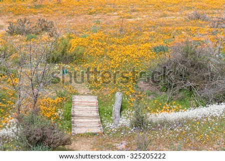 Start of the Korhaan Trail at Skilpad in the Namaqua National Park near Kamieskroon in the Namaqualand region of the Northern Cape Province of South Africa