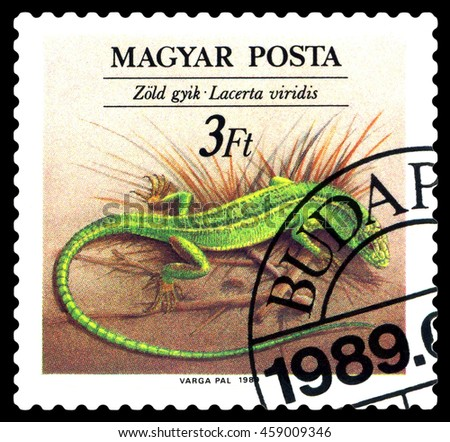 STAVROPOL, RUSSIA - JULY 25, 2016: a stamp printed by Hungary,  shows  Lacerta Viridis ,  reptile, circa 1989    - stock photo