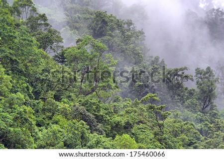 steamy rainforest, Barron Gorge, near Cairns, Queensland, Australia - stock photo