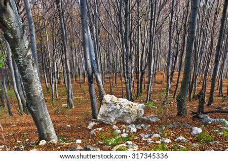 Steep terrain in a dense forest with a few rocks at Homolje mountains on a sunny autumn day, east Serbia - stock photo
