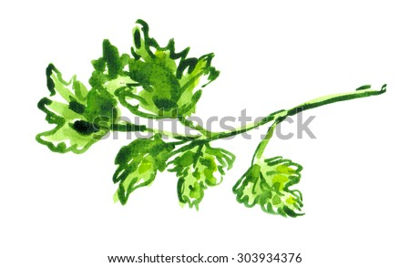 Stem of green herb painted in watercolor on white isolated background - stock photo