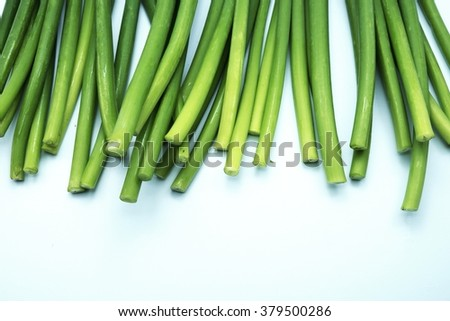 Stems/stalks of fresh green Allium Spring Onion flowers on blue-white background. Space for texts. - stock photo