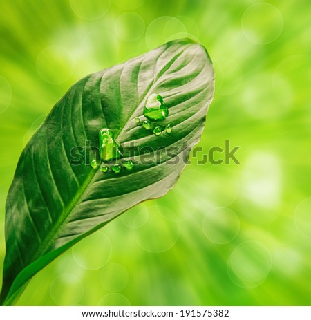 Step shape of water drops on green leaf, on the background of leaves and sun rays - stock photo