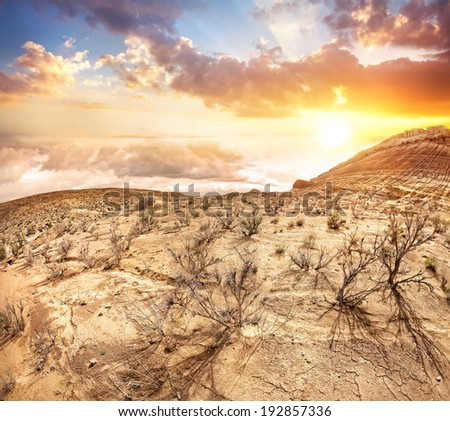 Steppe with dry plants at sunset sky in Altyn Emel national park, Kazakhstan, Central Asia - stock photo