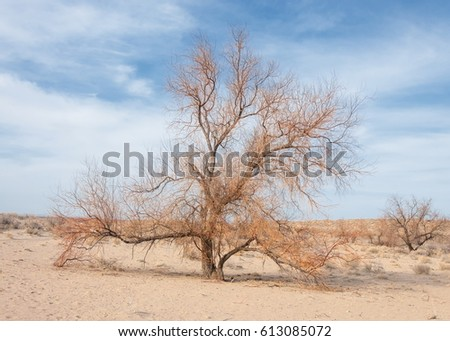 steppes of Kazakhstan, lonely tree in early spring.