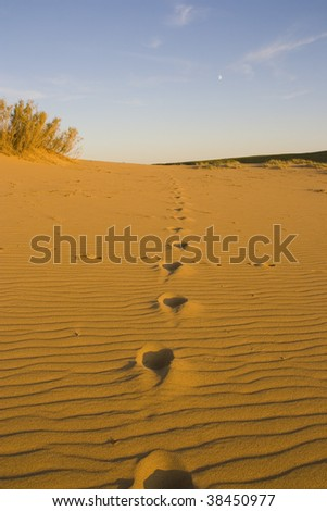 Steps in the gobi desert mongolia - stock photo