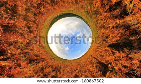 Stereographic panoramic projection of a fern tunnel with blue sky. 360 degree panorama.  - stock photo
