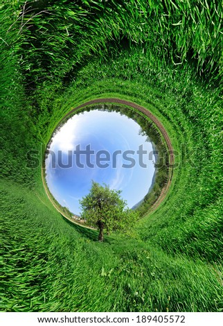 Stereographic panoramic projection of a green wheat field with tree in the middle. 360 degree panorama.