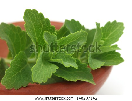 Stevia � A substitute of sugar on a brown pot - stock photo