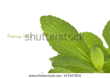 Stevia herb, sweetleaf isolated on white background. Healthy sugar alternative. Healthy living. - stock photo