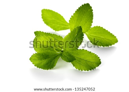 stevia leaves isolated - stock photo