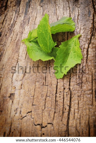Stevia leaves on wooden background