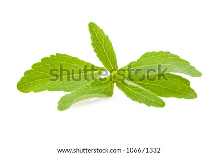 stevia rebaudiana leaves isolated on white