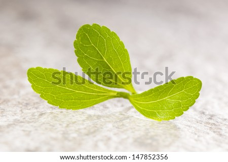 Stevia sweetleaf isolated on stone background. Healthy sugar substitute. Healthy lifestyle and eating. - stock photo