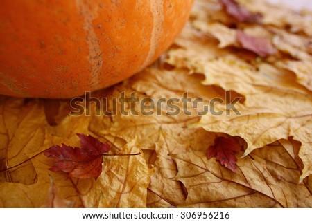 Still autumn yellow leaves pumpkin harvest concept - stock photo