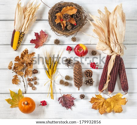 Still Life of a Variety of Fall Nature Items found Outdoors Arranged on Rustic White Boards  - stock photo