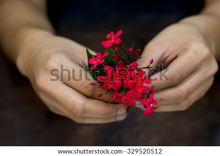 Still life of hand holding red flower on dark background, warm tone image. - stock photo