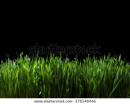 Still Life of Lush Green Grass at Night - stock photo