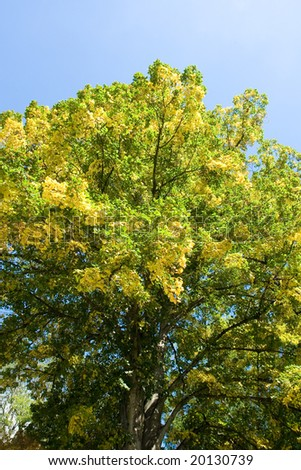 Still-life of the old tree with green leaves - stock photo