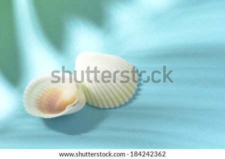 Still life of two white shells on a blue background with shadow of a palm leave over top