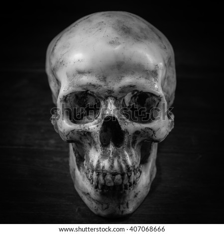Still life photography with human skull  - stock photo