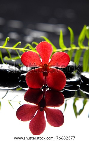 Still life Red orchid with green fern reflection - stock photo